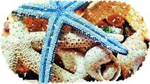 Коврик Bella 69х39 овал морская звезда